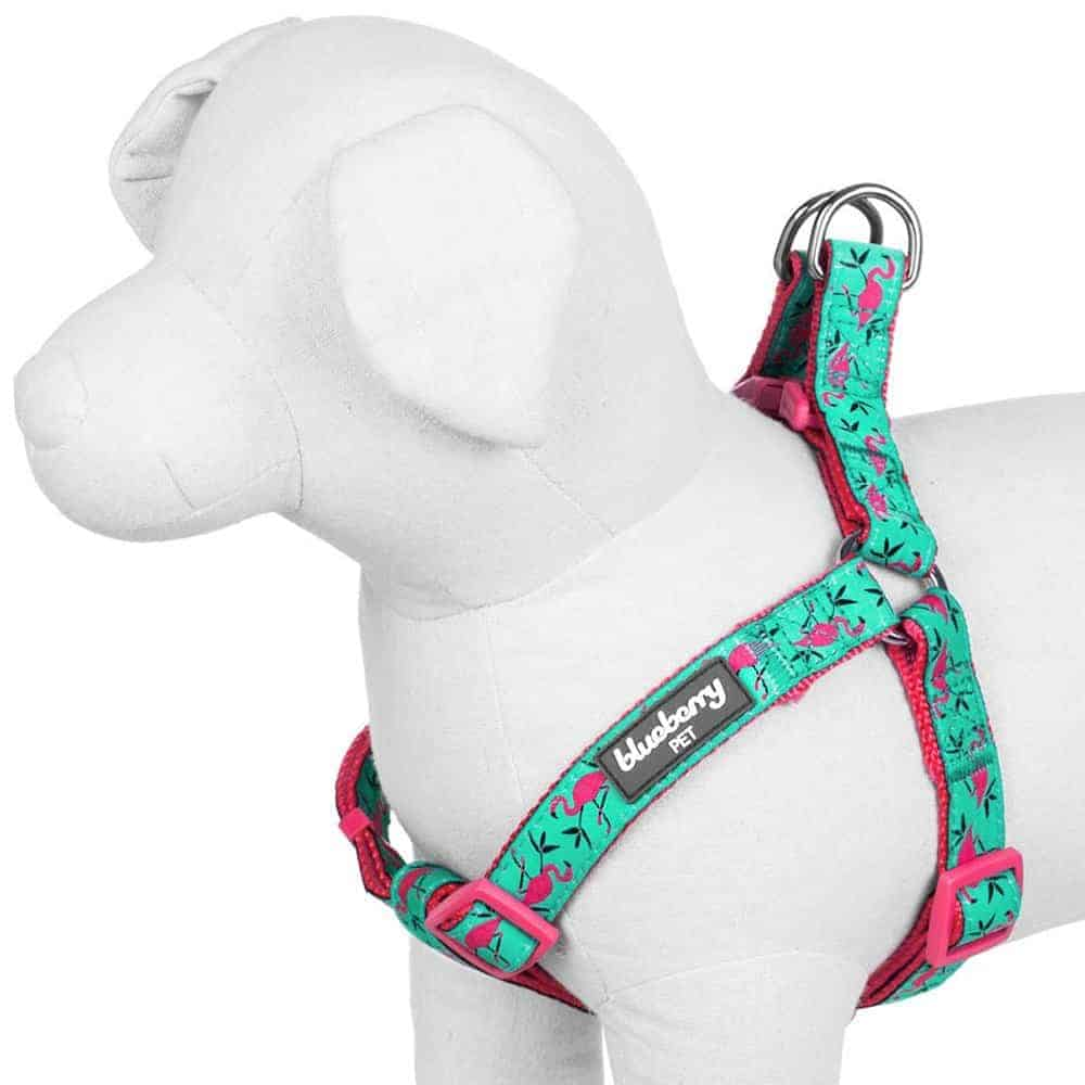 Best Harnesses for Small Dogs – Blueberry Pet