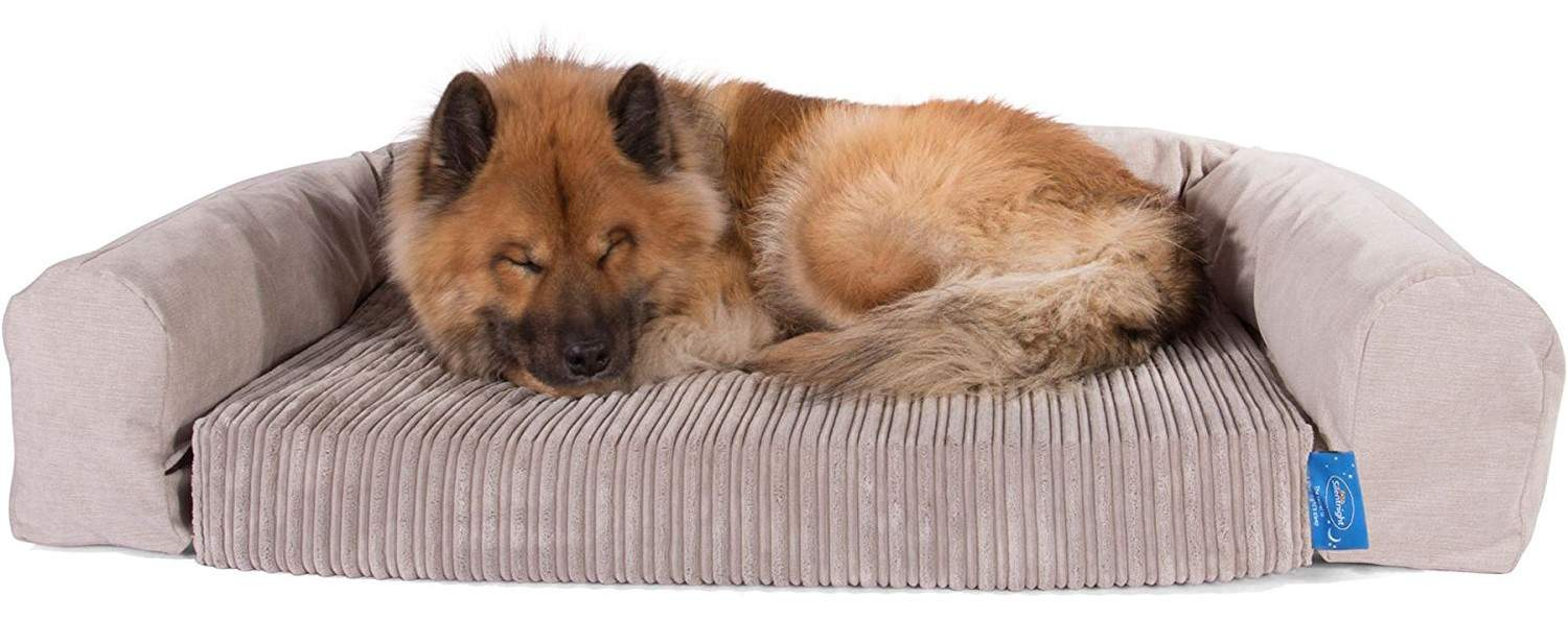 Best Posh Dog Bed – Silentnight