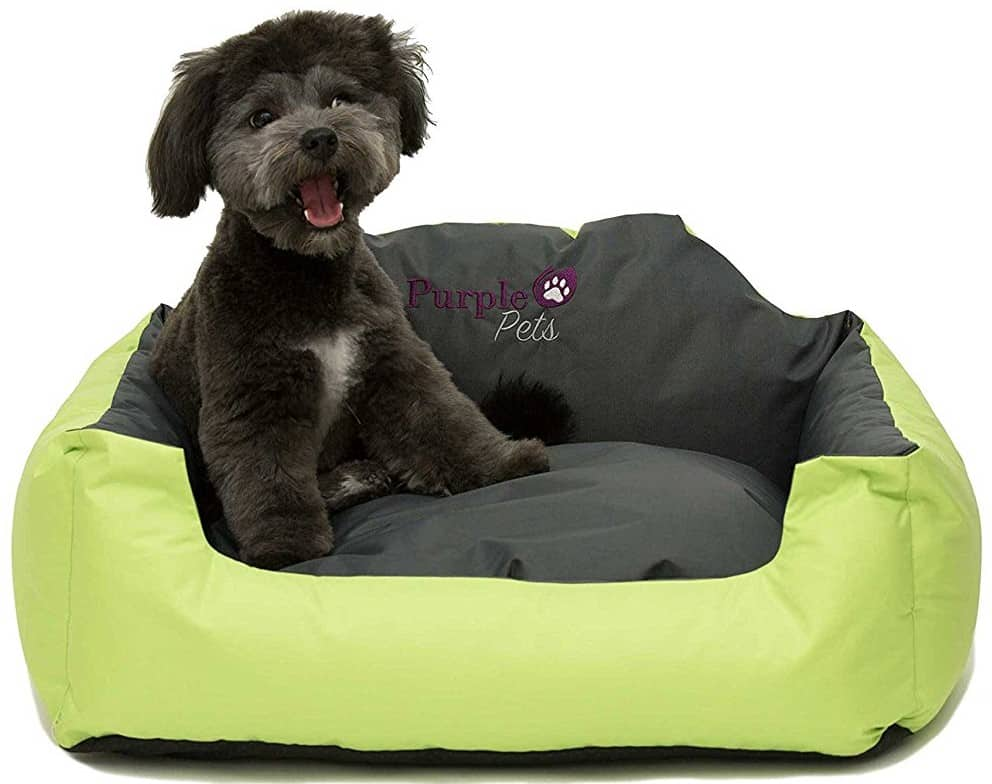 Best Puppy Bed – Purple Pets