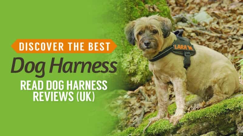 Discover the Best Dog Harness: Read Dog Harness Reviews (UK)
