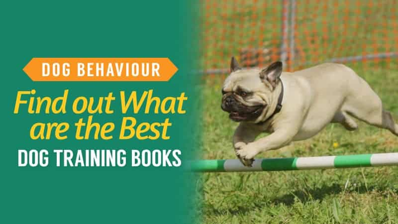 Dog Behaviour: Find out what are the Best Dog Training Books
