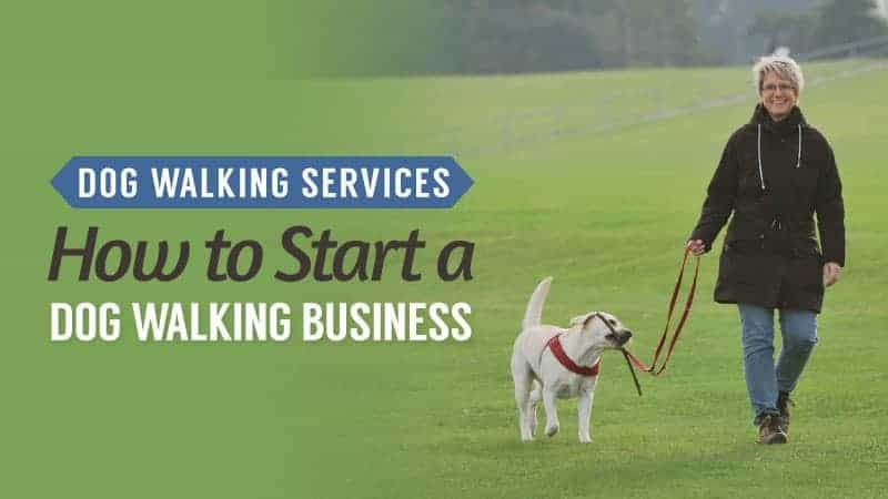 Dog Walking Services: How to Start a Dog Walking Business