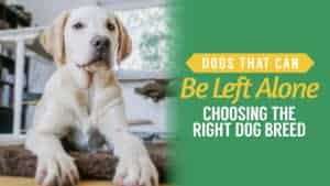 Dogs That Can be Left Alone: Choosing the Right Dog Breed