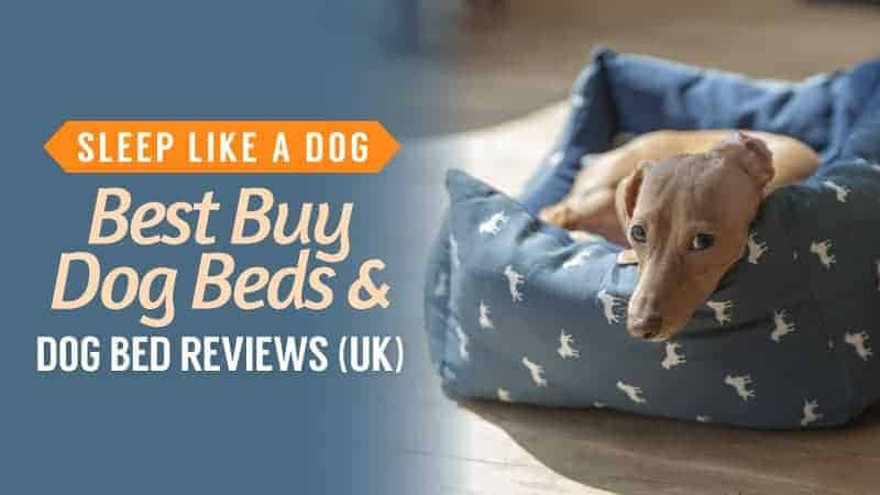 Sleep Like a Dog: Best Buy Dog Beds and Dog Bed Reviews (UK)