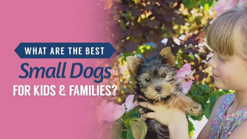 What Are The Best Small Dogs For Kids and Families?