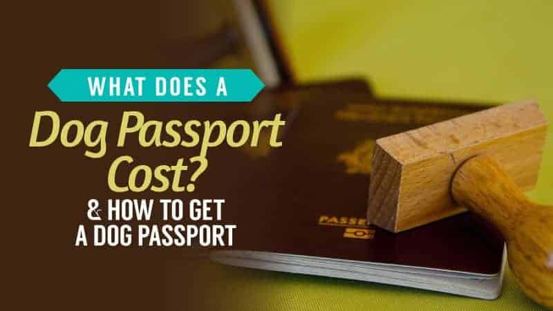 What Does a Dog Passport Cost? & How to Get a Dog Passport