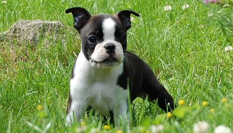 What Are The Best Small Dogs For Kids And Families Updated