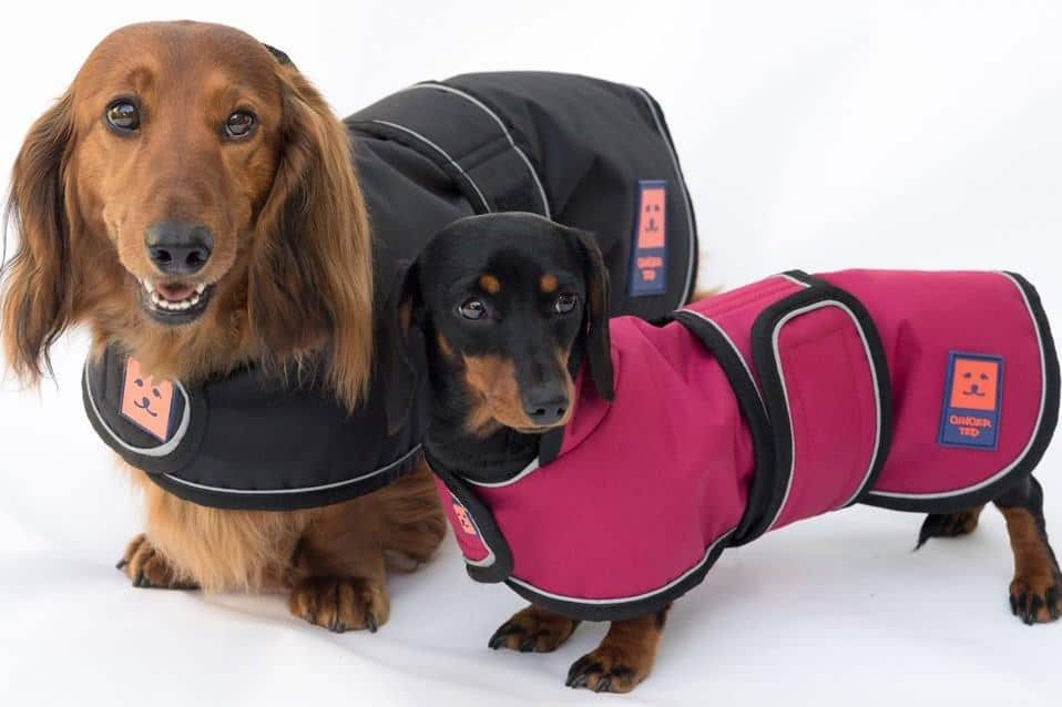 Best Dachshund Dog Coats - Ginger Ted