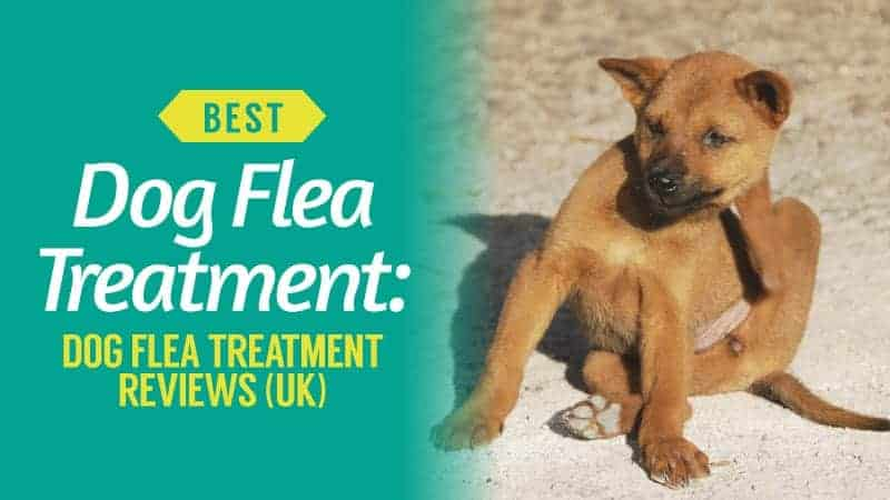 Best-Dog-Flea-Treatment-Dog-Flea-Treatment-Reviews-UK
