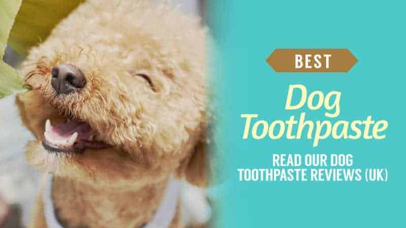 Best Dog Toothpaste Read our Dog Toothpaste Reviews UK