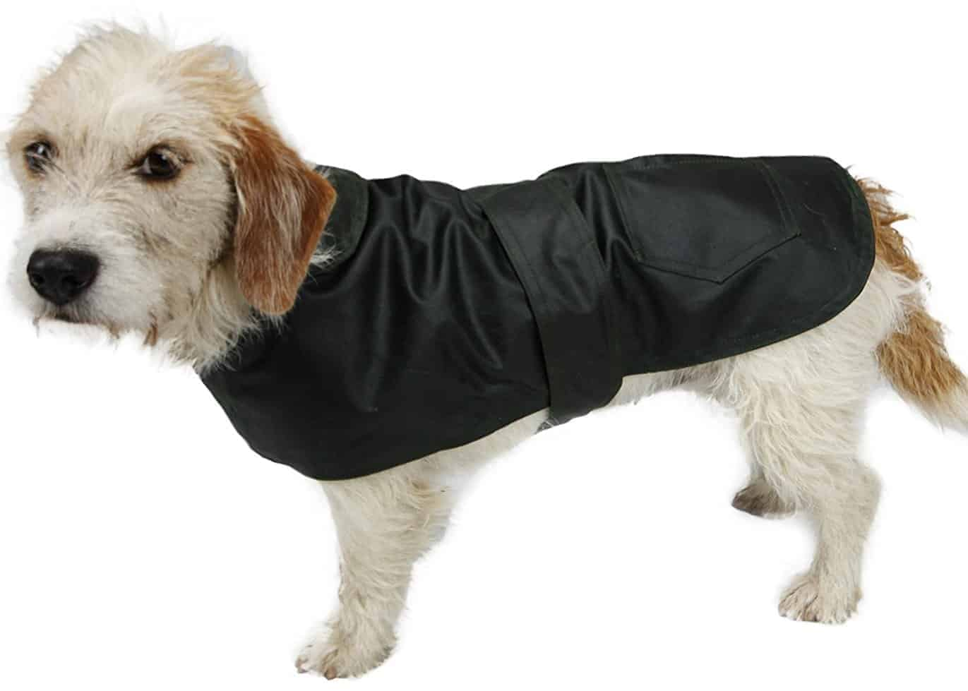Best Raincoats for Dogs - Bradshaw & Bentley