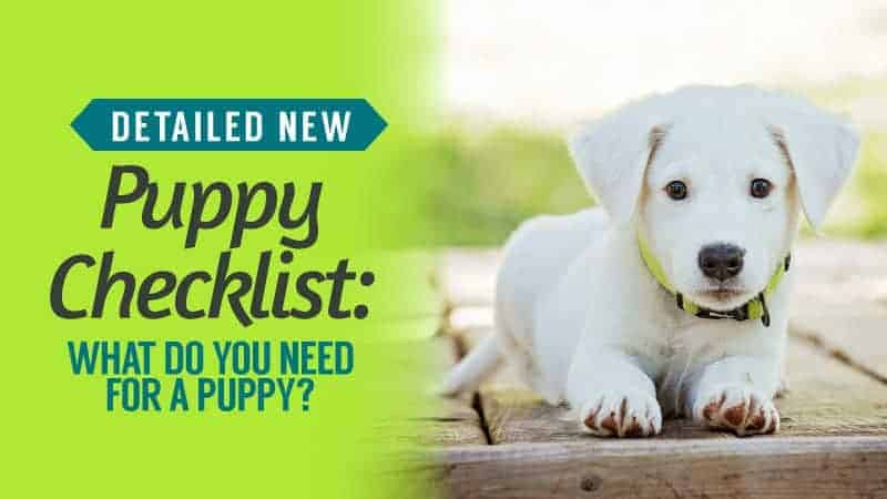 Detailed-New-Puppy-Checklist-What-Do-You-Need-For-A-Puppy
