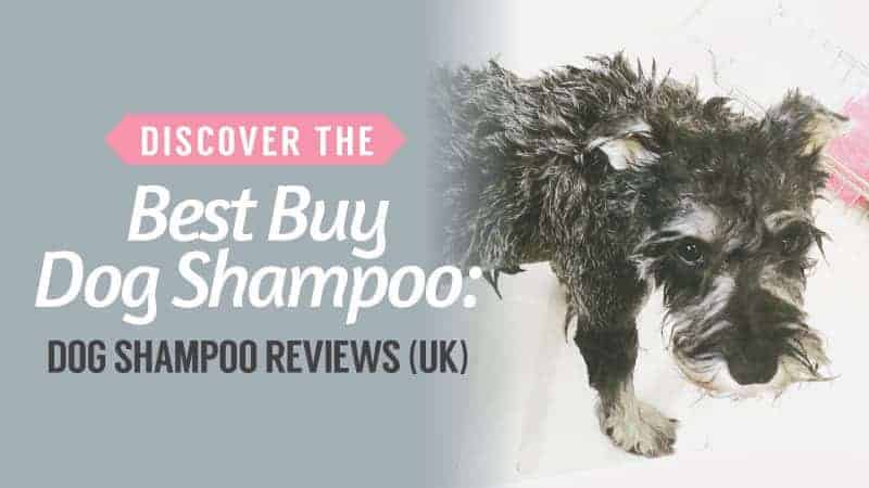 Discover-the-Best-Buy-Dog-Shampoo-Dog-Shampoo-Reviews-UK