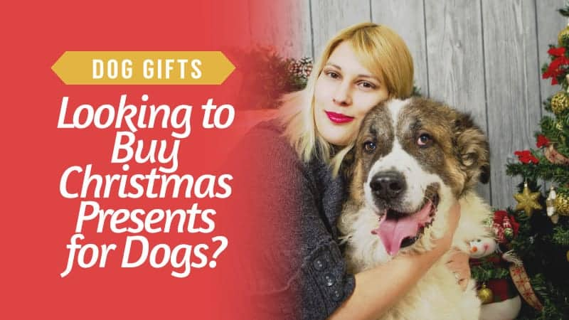 Dog-Gifts-Looking-to-Buy-Christmas-Presents-for-Dogs