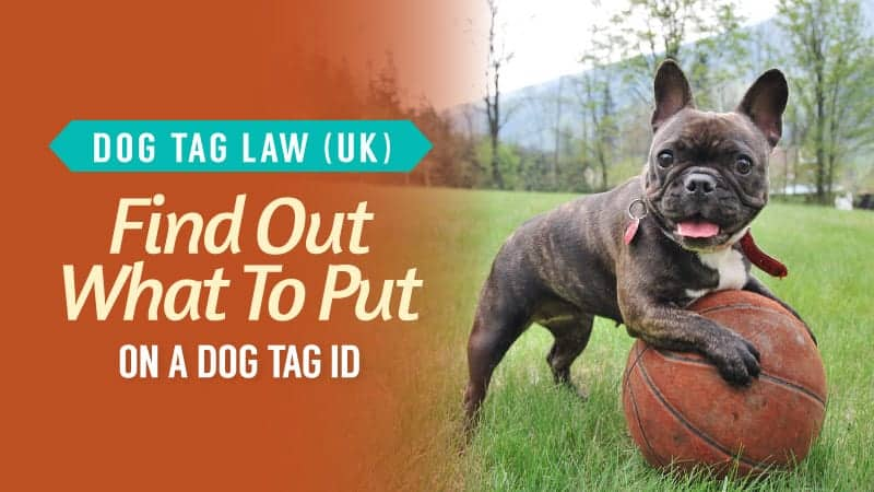 Dog-Tag-Law-UK-Find-Out-What-To-Put-On-A-Dog-Tag-ID