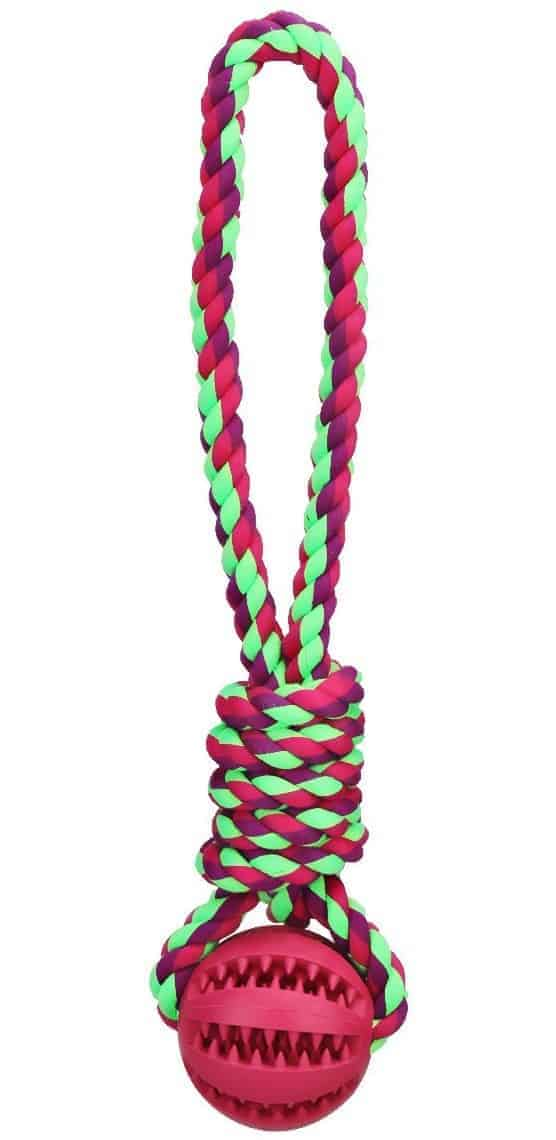 Most Indestructible Dog Toys – Tailmate