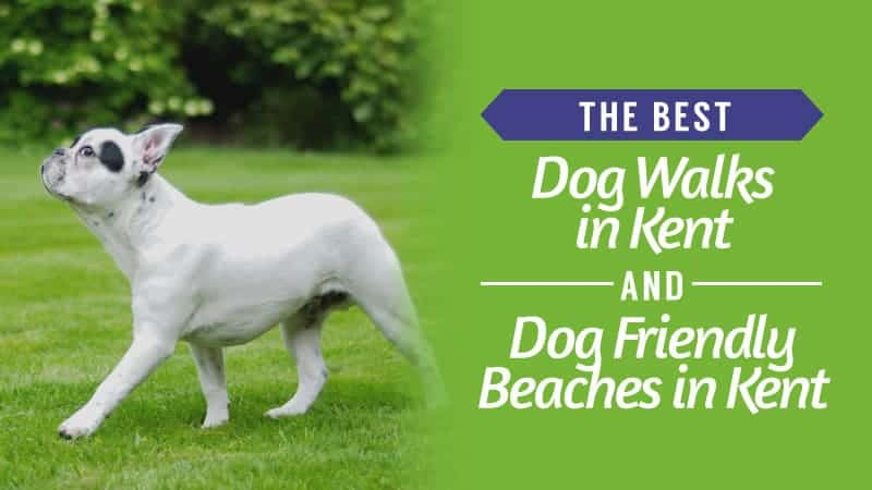The-Best-Dog-Walks-in-Kent-and-Dog-Friendly-Beaches-in-Kent