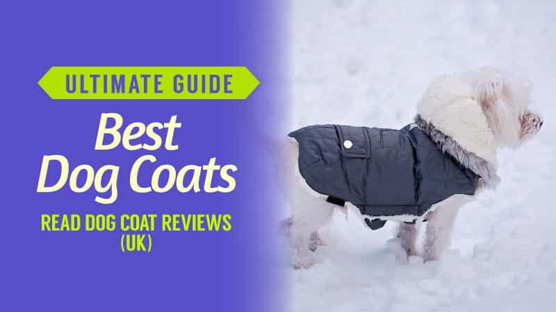 Ultimate-Guide-Best-Dog-Coats-Read-Dog-Coat-Rewiews-UK
