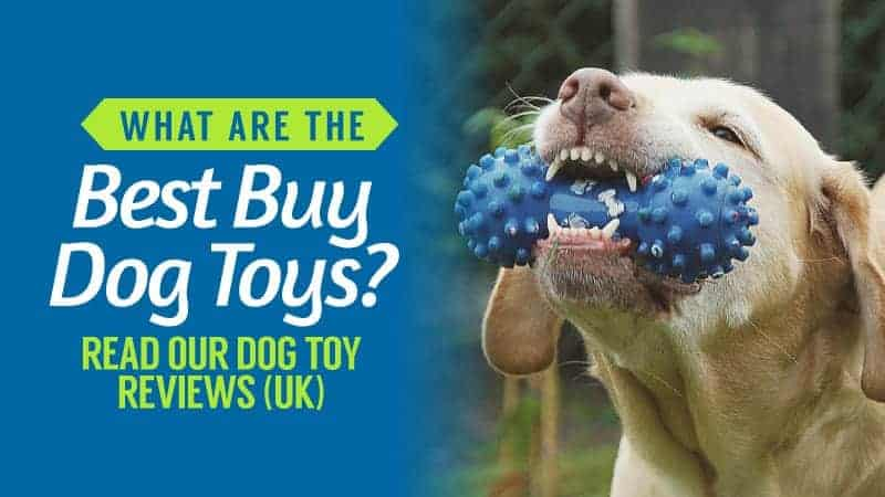 What-are-the-Best-Buy-Dog-Toys-Read-our-Dog-Toy-Reviews-UK