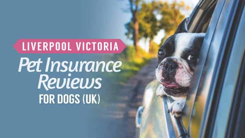lv pet insurance review