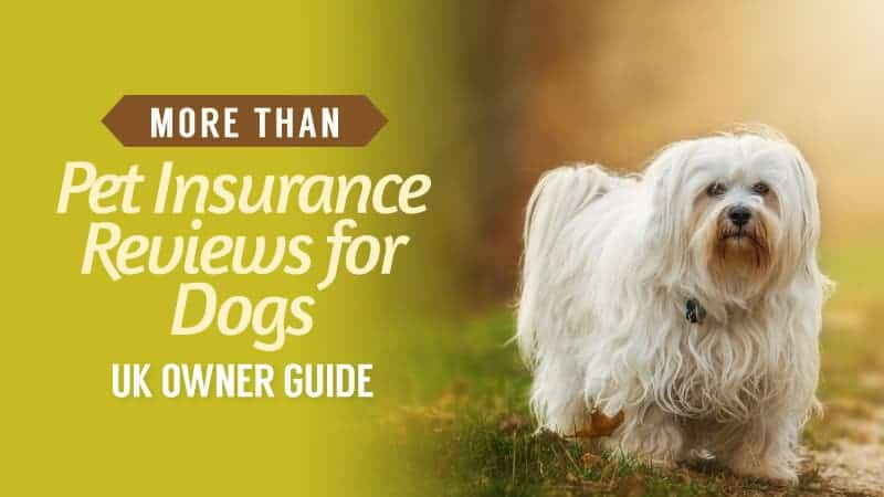 More Than Pet Insurance Reviews for Dogs
