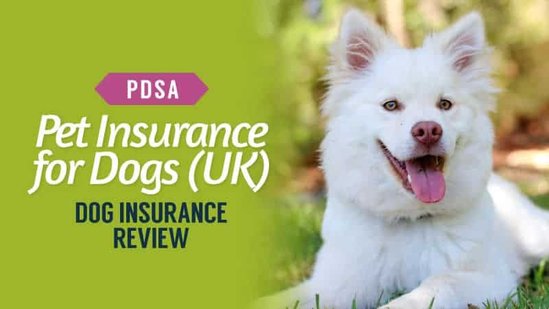 Pdsa Pet Insurance For Dogs Uk 2020 Dog Insurance Review