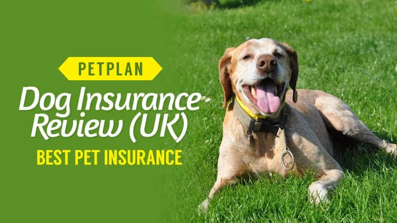 petplan dog insurance review (uk) \u2013 best pet insurance (updated)petplan dog insurance review uk best pet insurance
