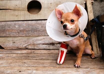 Insurance For Dogs >> Pdsa Pet Insurance For Dogs Uk 2019 Dog Insurance Review