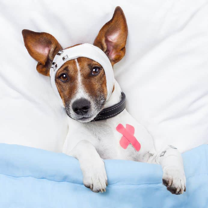 Insurance For Dogs >> Read Tesco Dog Insurance Reviews 2019 Uk Dog Owner Guide