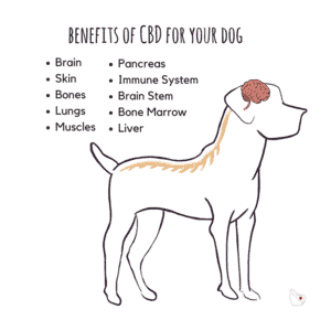 CBD Products for dogs 2