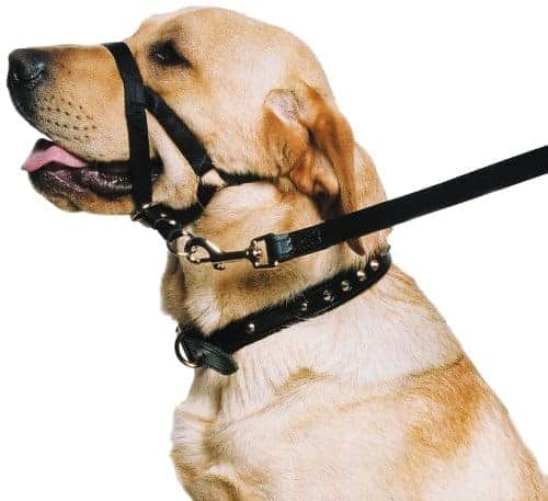 Ancol - Dog Training Halter