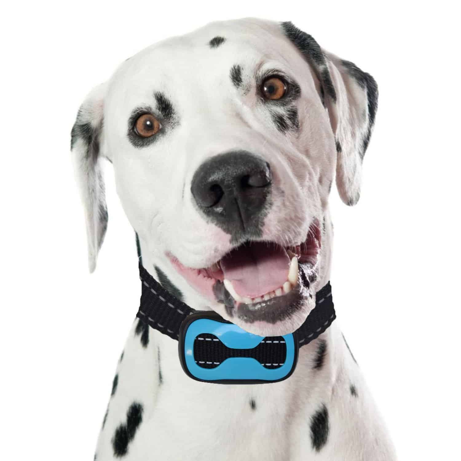 Best Anti-Bark Collars for Large Dogs – PetSol