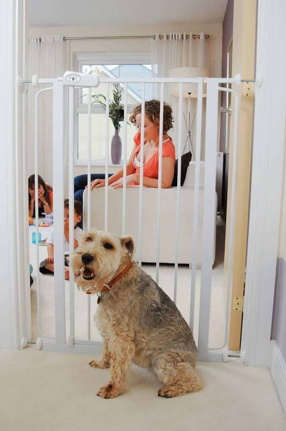 Best Dog Gate for Jumpers – Bettacare