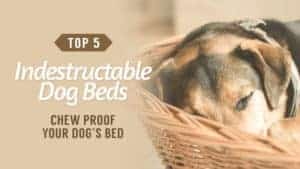 Chew-Proof-Your-Dogs-Bed-Top-5-Indestructable-Dog-Beds