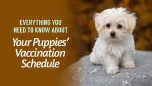 Everything-You-Need-to-Know-About-Your-Puppies-Vaccination-Schedule