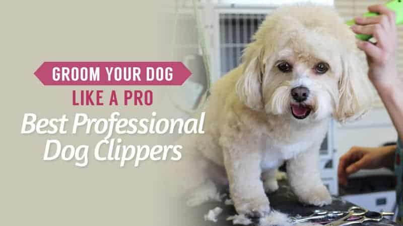 Groom-Your-Dog-Like-a-Pro-Best-Professional-Dog-Clippers
