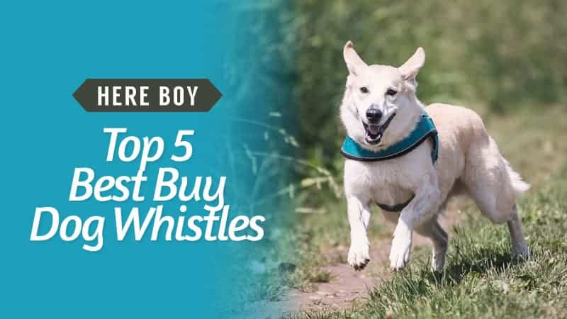 Here-Boy-Top-5-Best-Buy-Dog-Whistles