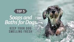 Keep-Your-Dog-Smelling-Fresh-Top-5-Soaps-and-Baths-for-Dogs