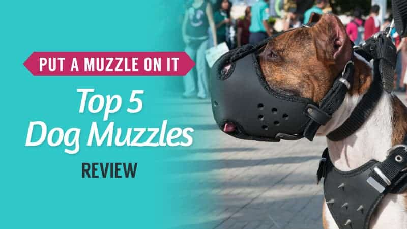 Put a Muzzle on It – Top 5 Dog Muzzles Review