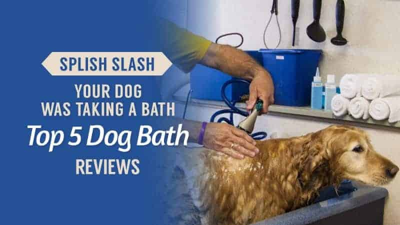 Splish-Slash-Your-Dog-Was-Taking-a-Bath-Top-5-Dog-Bath-Reviews