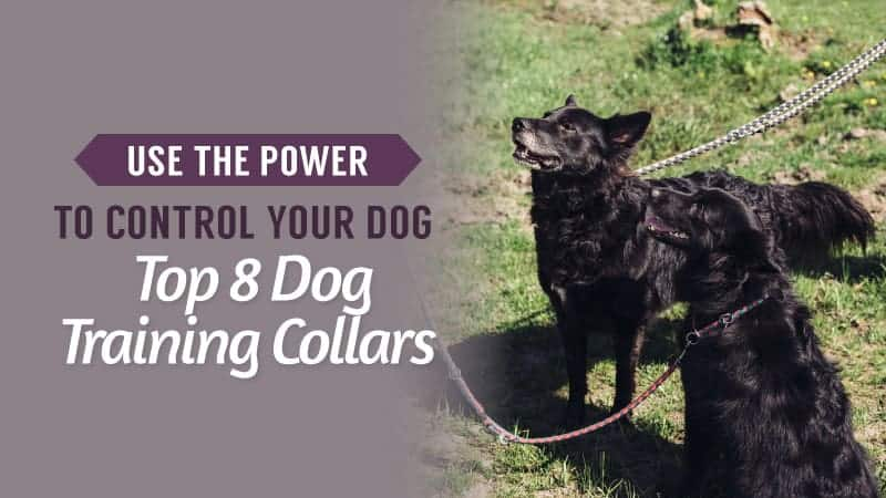 Use-The-Power-to-Control-Your-Dog-Top-8-Dog-Training-Collars