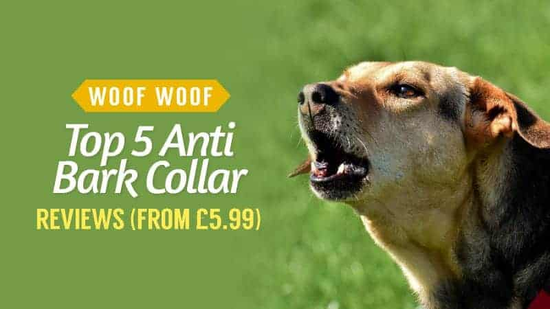 Woof Woof – Top 5 Anti-Bark Collar Reviews from £5.99