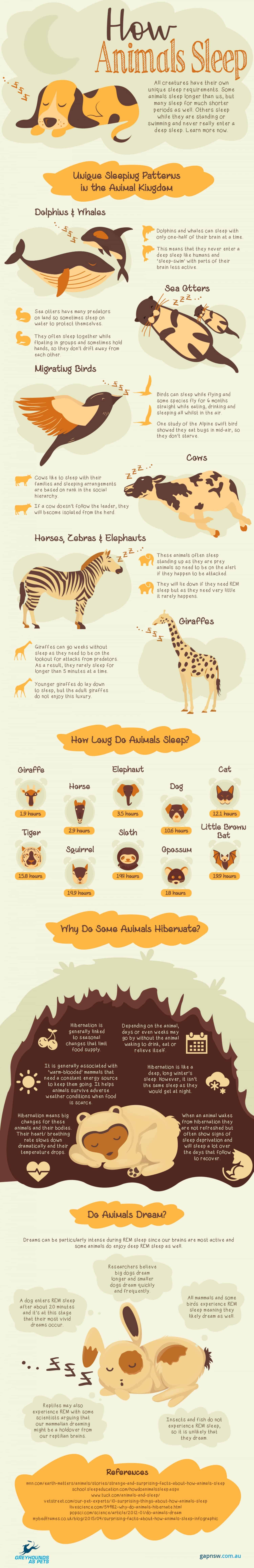 Infographic How Animals Sleep