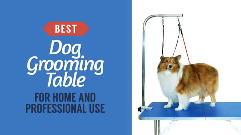 Best Dog Grooming Table for Home Use and Professional Use