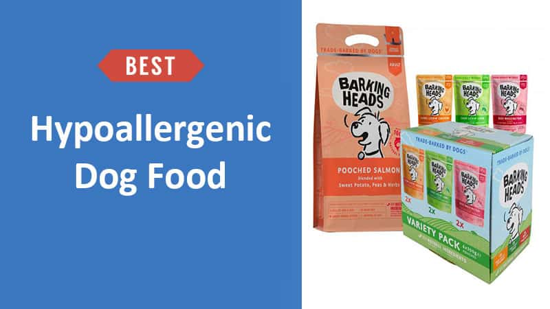 Best Hypoallergenic Dog Food UK