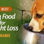 10-Best-Dog-Food-for-Weight-Loss-UK-Brands