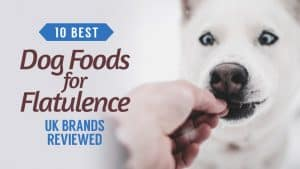 10-Best-Dog-Foods-for-Flatulence-UK-Brands-Reviewed
