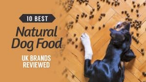 10-Best-Natural-Dog-Food-UK-Brands-Reviewed