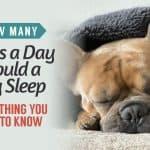 how many hours a day should a dog sleep