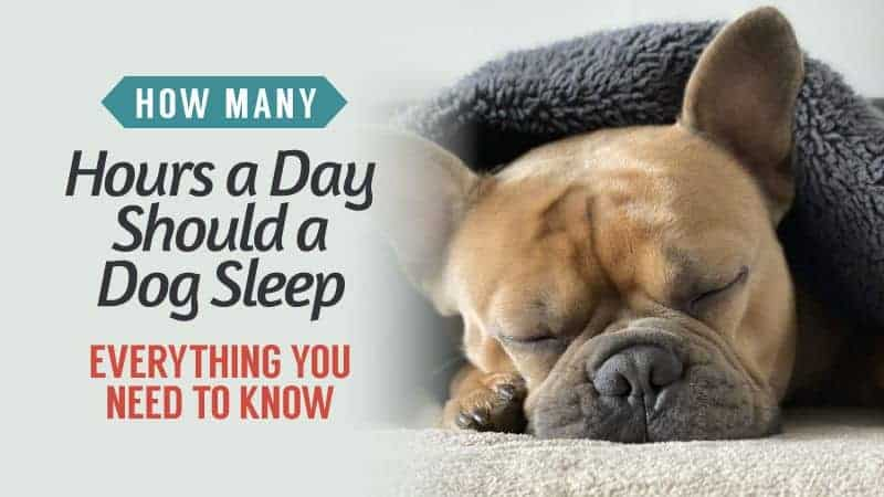 how many hours a day should a dog sleep